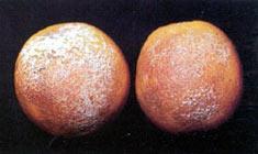 Aguado naranja