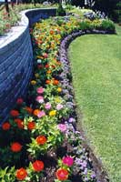 Flores usos en jard n - Arriate plantas ...