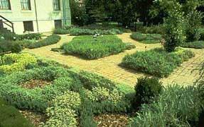 Cultivo de plantas arom ticas - Plantar hierbas aromaticas ...
