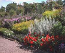 Plantas y flores dise o con flores anuales bulbos - Arriate plantas ...