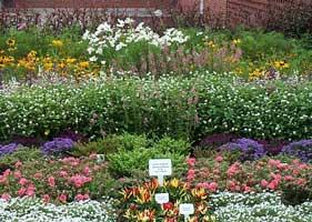 consejos febrero hemisferio sur flores plantas