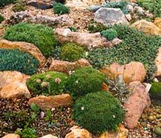 Rocallas c mo construir o hacer una rocalla jard n de for Plantas para rocallas