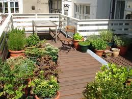 Terrazas Con Plantas Cuidados Básicos