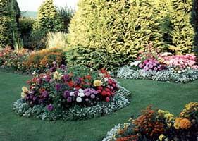 Consejos Para Junio Hemisferio Norte Flores Plantas