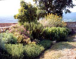 Jard n de bajo o poco mantenimiento for Jardines con poco mantenimiento
