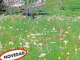 c sped japon s lleva semillas de florecitas lo conoc is