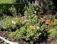 Condimentos de hierbas arom ticas - Plantar hierbas aromaticas ...