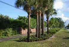 Cultivo de palmeras riego y abono de palmas - Imagenes de jardines con palmeras ...