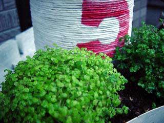 Fotos de jardines y plantas de sombra pgina 2 infojardin - Plantas de sombra para jardin ...