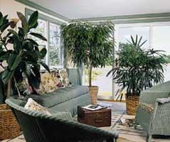 Decoraci n con plantas de interior - Plantas de interior para salon ...