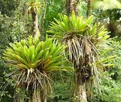 orquideas y temperatura