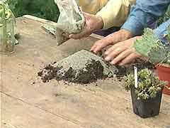 0a067244c Lo fundamental para este tipo de plantas es que el substrato sea suelto,  aireado, poroso y nunca se quede encharcado reteniendo el agua mucho ...